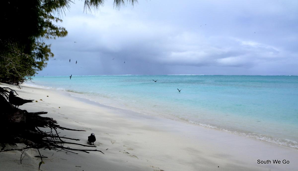 birds sea and sand