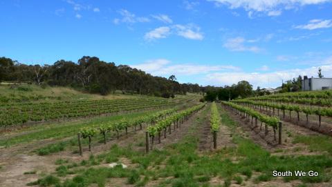 Vignobles de la valée de Clare